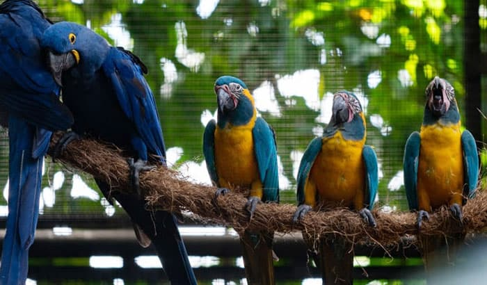 macaw parrot cage