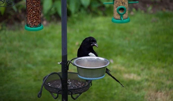 cover bird feeders