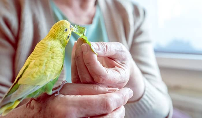 creating a reward system for your bird