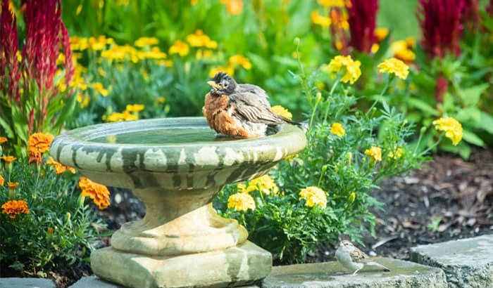 how to keep fountain water clean for birds