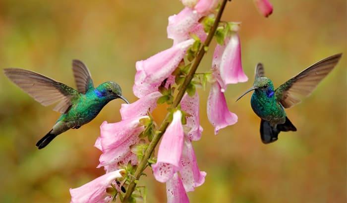 understanding hummingbirds