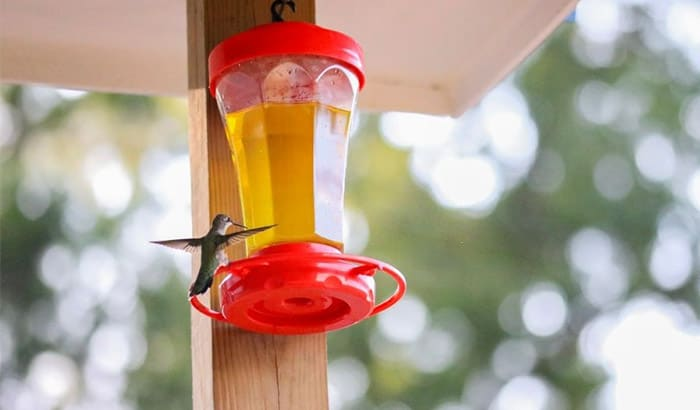 why do hummingbirds stop coming to feeders