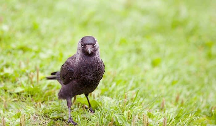 how to deter hawks