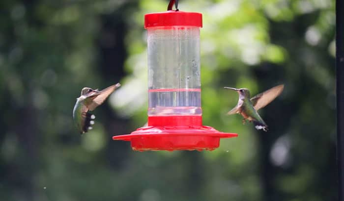 prevent hummingbirds from fighting each other over feeders